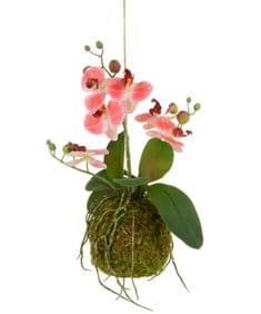 Coral hanging orchid