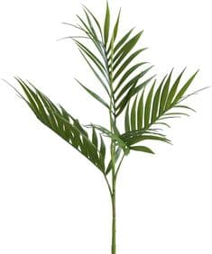 Large fresh green palm branch