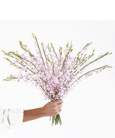 Miniature soft lilac orchids hand-tied bouquet