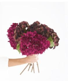 Winter hydrangea hand-tied bouquet